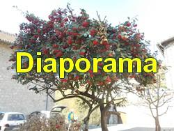 lasone_diaporama