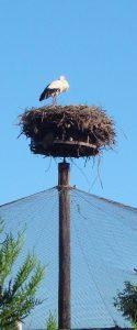 une cigogne en Alsace ne fait pas l'été