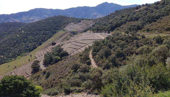 2019 Argelès (41)