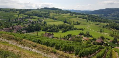 03 Vignobles de Chautagne